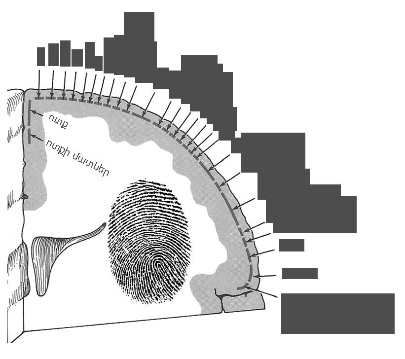 Sensory cortex